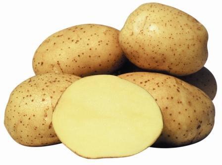 Картофель, сорт Винета.