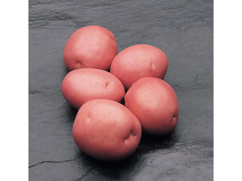 Картофель, сорт Кураж