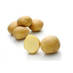 Картофель, сорт Карузо.