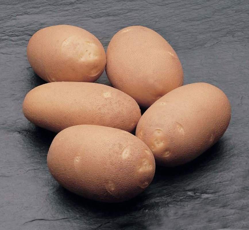 Картофель, сорт Инноватор.