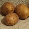 Картофель, сорт Загадка.