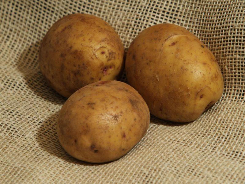 11666 Картофель, сорт Загадка.