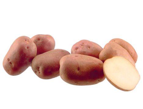 Картофель, сорт Полиське джерело.