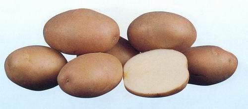 Картофель, сорт Вернисаж.