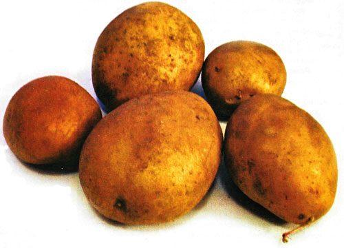 Картофель, сорт Овация.