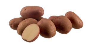 Картофель, сорт Мустанг.