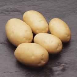 Картофель, сорт Виктория.