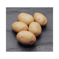 Картофель, сорт Джаэрла.