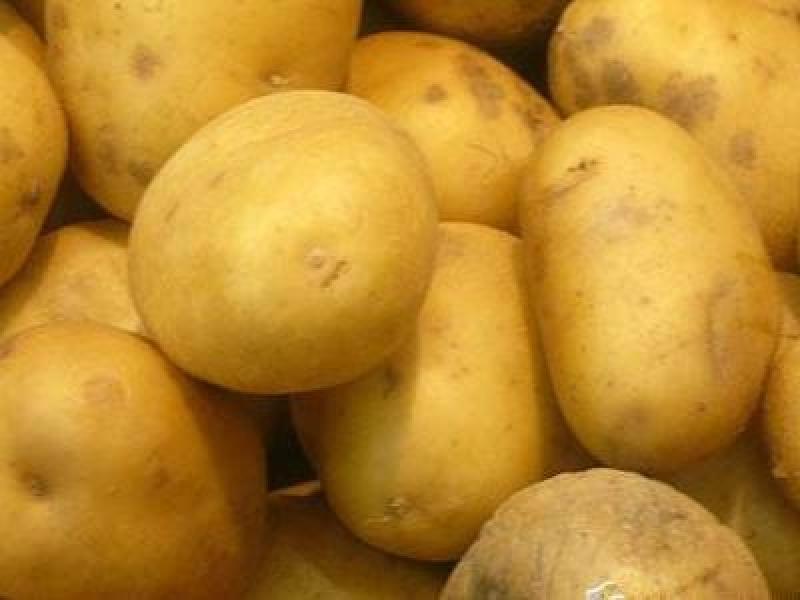 Картофель, сорт Кимерия.