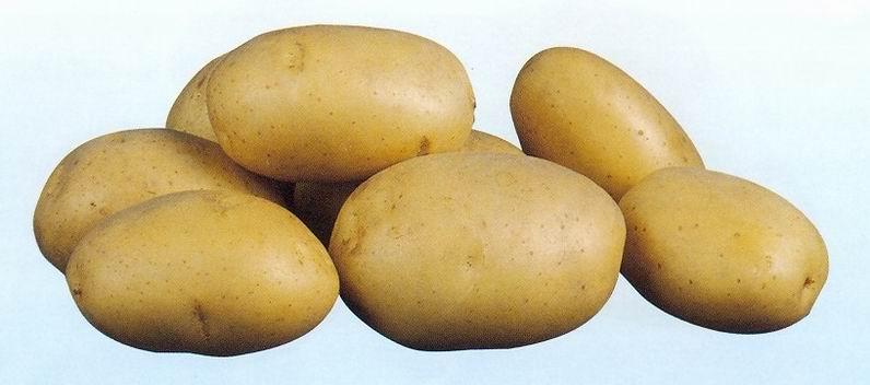 Картофель, сорт Космос.