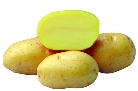 Картофель, сорт Роксана.
