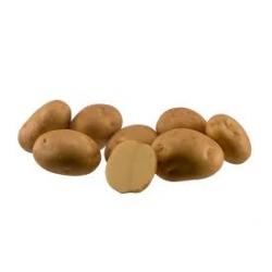 Картофель, сорт Марфона.