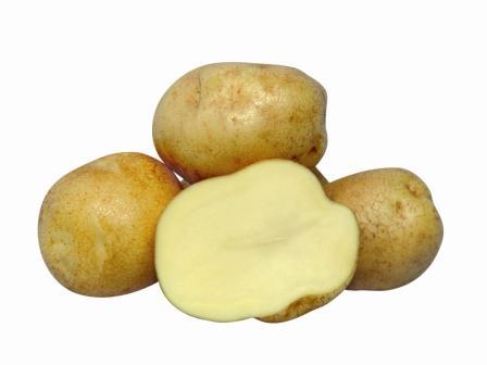 Картофель, сорт Омега.