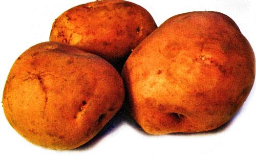 Картофель, сорт Рампель.