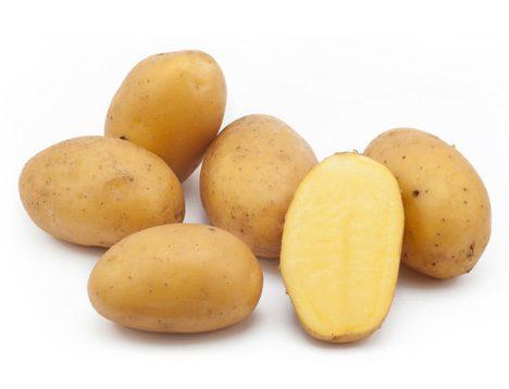 Картофель, сорт Талент.