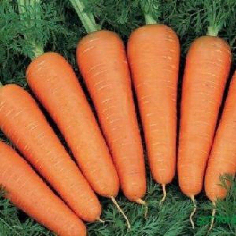 Морковь, сорт Канада F1.