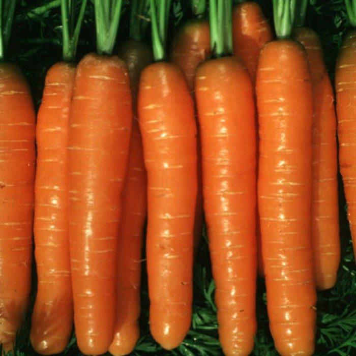 Морковь, сорт Скарла.