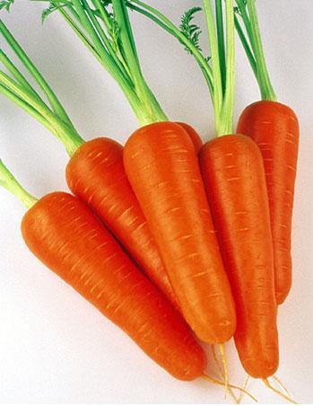 Морковь, сорт Виктория F1.