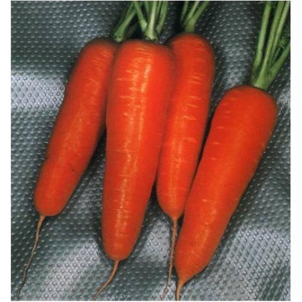 Морковь, сорт Курода Шантанэ.