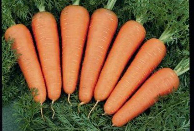 Морковь, сорт Каскад F1