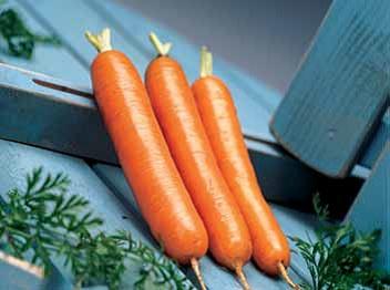 13495 Морковь, сорт Дордонь F1.