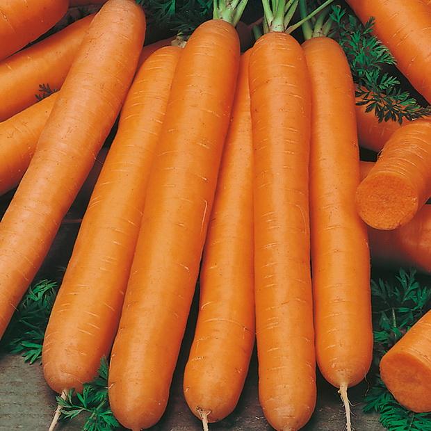 Морковь, сорт Байон РЦ F1.