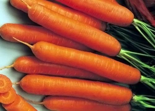 Морковь, сорт Монтана РЦ