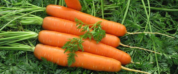 Морковь, сорт Свит Кэндел F1.