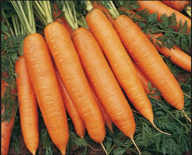 13517 Морковь, сорт Болеро F1.