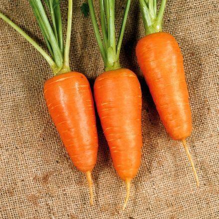 Морковь, сорт Ред Коред.