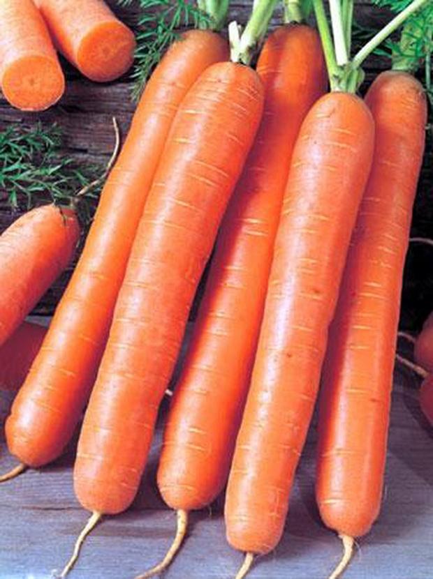 13531 Морковь, сорт Кадриль.