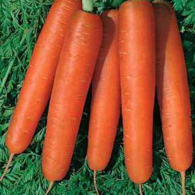 Морковь, сорт Нарбонне F1.