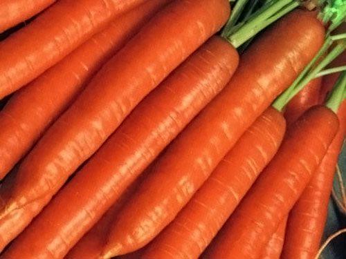 Морковь, сорт Рига РЦ F1.