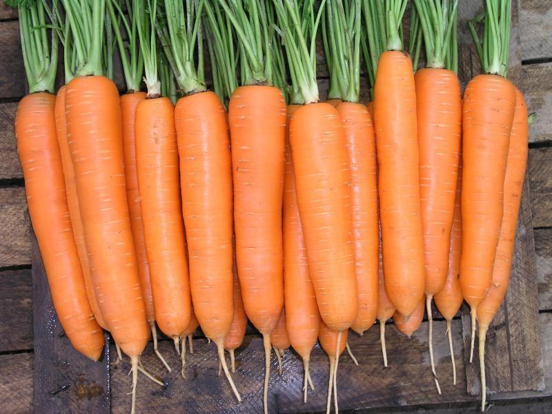 Морковь, сорт Кантербюри F1.