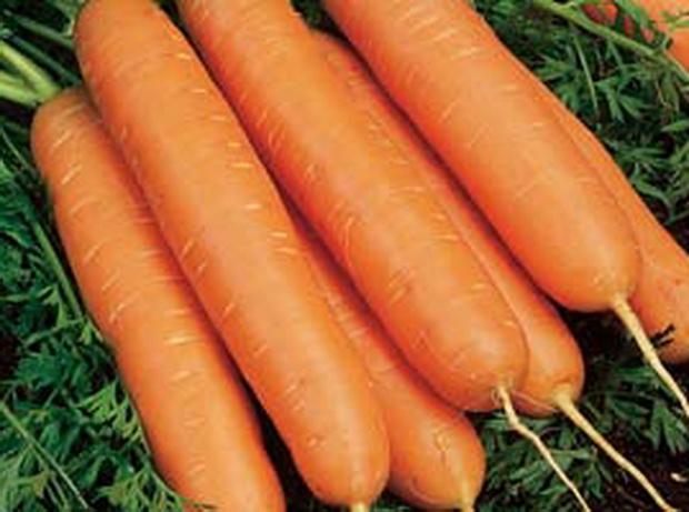 Морковь, сорт Ньюс F1.