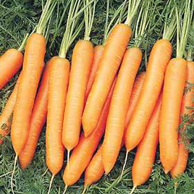 Морковь, сорт Яя F1