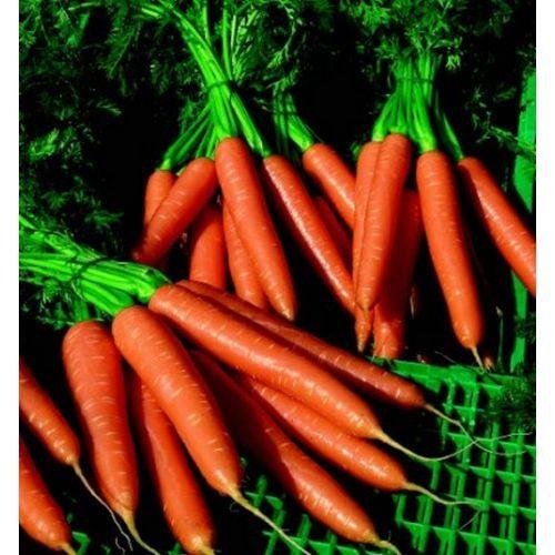Морковь, сорт  Вереснева