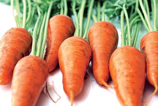 Морковь, сорт Карнавал.