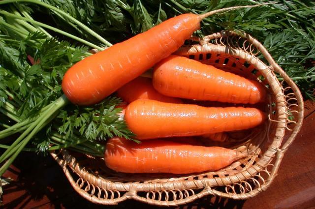 Морковь, сорт Мазурка.