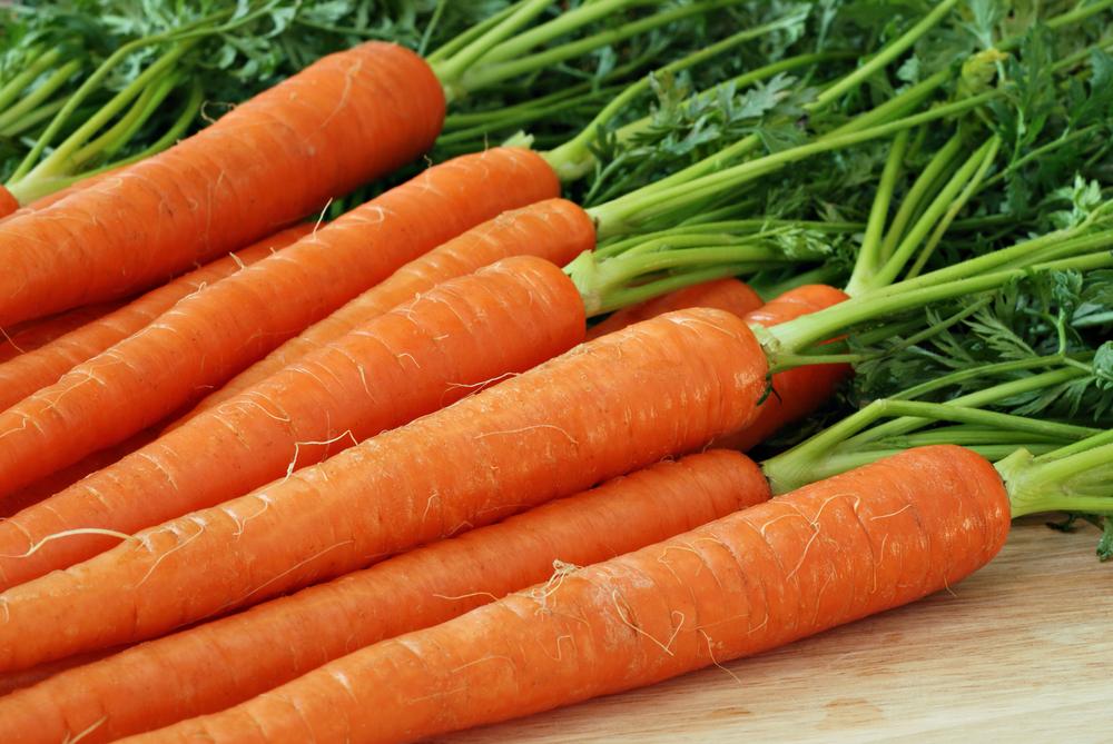 Морковь, сорт Билбо F1.