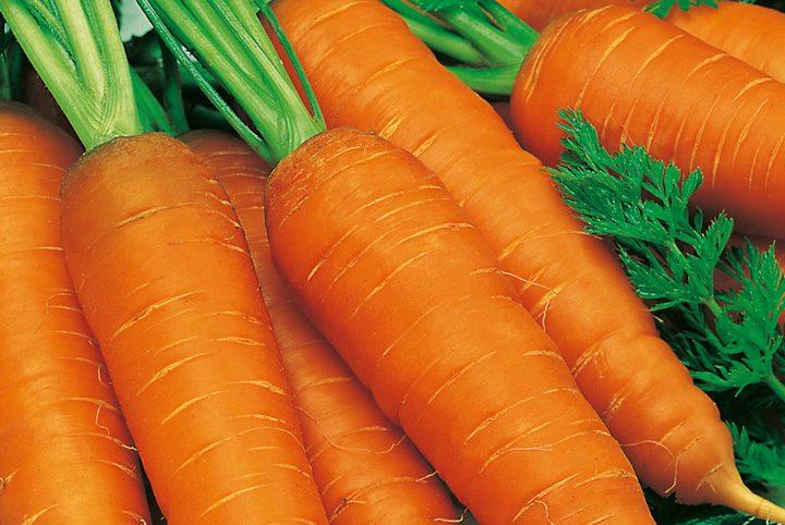 Морковь, сорт Геркулес.