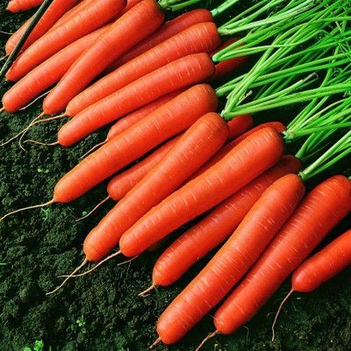 Морковь, сорт Оленка.