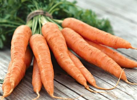 14245 Морковь, сорт Морелия F1.