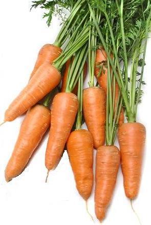 Морковь, сорт Марлинка.