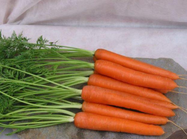 Морковь, сорт Джевелин F1.