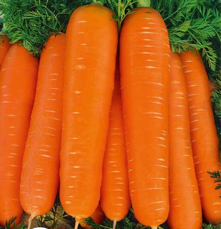 Морковь, сорт Дарина.