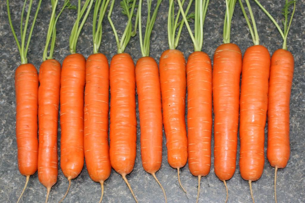 Морковь, сорт Наоми