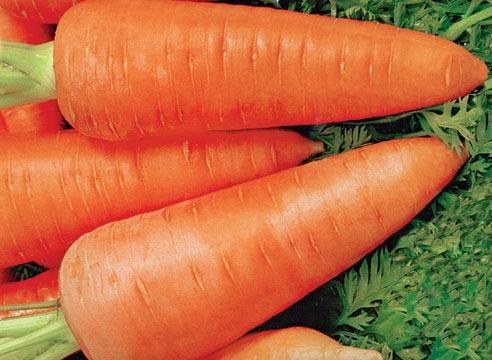 Морковь, сорт Шантенэ.