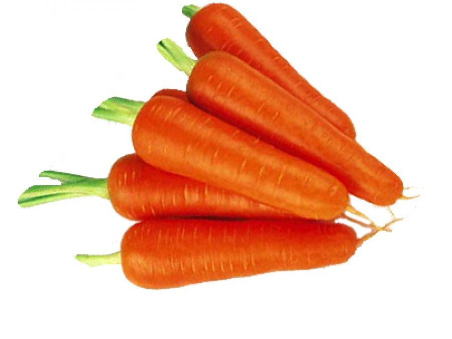 Морковь, сорт Ступицька
