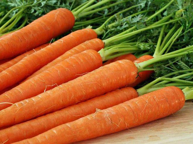 Морковь, сорт Нантская Харьковская.